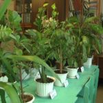 На станції юннатів можна купити або обміняти кімнатні рослини (сюжет)