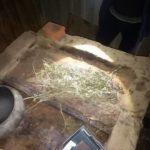В шосткинском районе полицейские обнаружили очередной тайник с коноплей (фото)