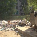 Мешканці будинку №52 по вул. Короленко у відчаї – їх прибудинкова територія потопає у бур'янах і смітті (сюжет)