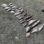 Понад 30 кілограмів ікряної риби здобув браконьєрським способом 55-річний житель Шостки (Сюжет)