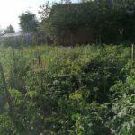 200 кустов мака выращивала на своем приусадебном участке 69-летняя жительница района