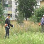 Небайдужі шосткинські еко-активісти організували черговий челлендж «Стоп бур'ян»(Сюжет)