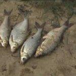 У Шосткинському районі спіймали місцевого жителя, який займався незаконною риболовлею