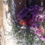 У Шостці власник приватного будинку затримав викрадачку квітів