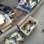 На Шосткинщині задокументовані грубі порушення Правил рибальства (Фото)