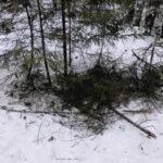 Зниклого чоловіка знайшли мертвим у лісі